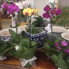 Orchids and Pots